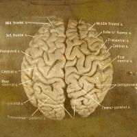 La curiosidad por el cerebro de personalidades famosas